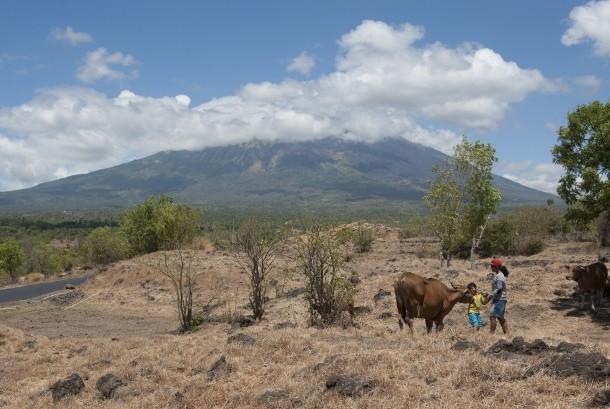 Dua warga mengembalakan sapi di Desa Batu Dawa yang berjarak sekitar 10 kilometer dari Gunung Agung, Karangasem, Bali, Senin (25/9).