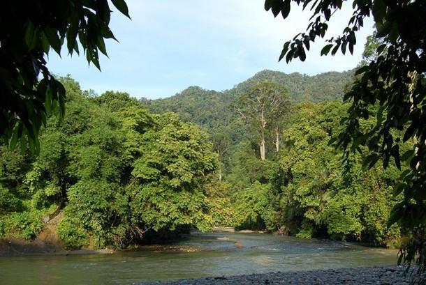 Borneo forest (Illustration)