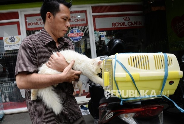 Karyawan memberikan perawatan terhadap kucing yang dititipkan di tempat penitipan hewan. (ilustrasi)
