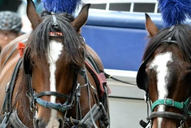 Kereta ditarik kuda ini banyak digunakan oleh turis di Melbourne.