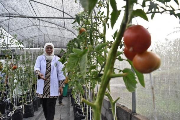 Mensos Khofifah Indar Parawansa meninjau kebun hidroponik di Green House Al Mina Farm, Semarang, Senin (25/9).