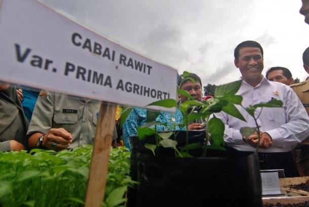 Menteri Pertanian Andi Amran Sulaiman (kanan) mencanangkan Gerakan Nasional Penanaman Cabai (Gertam Cabai) di Bergas, Kabupaten Semarang, Jawa Tengah, Senin (23/1).