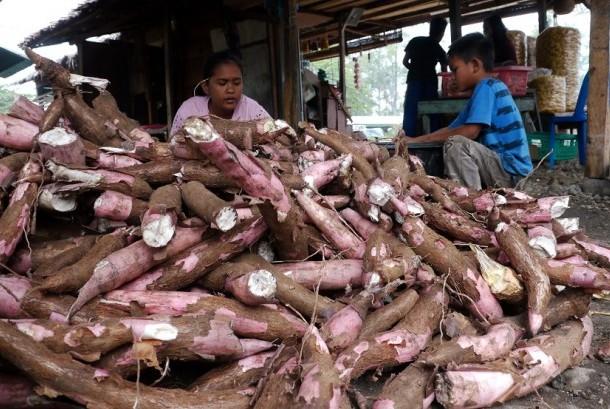 Pengrajin mengupas kulit ubi kayu sebelum digoreng menjadi produk keripik ubi di sentra pengrajin kweipiki, Desa Saree, Kecamatan Saree, Kab, Aceh Besar, Aceh