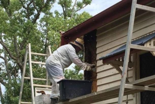 Peter McDonald si kontraktor memakai pakaian pelindung untuk membantu melepaskan lebah.
