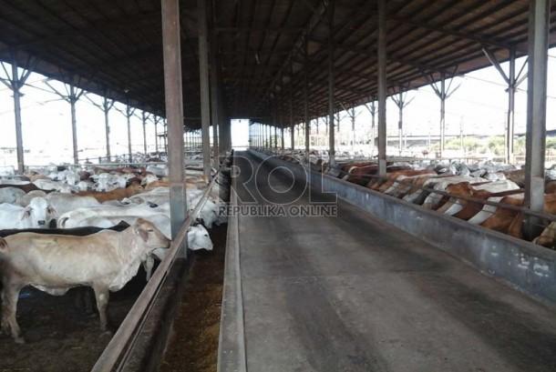 Peternakan dan penggemukan sapi milik grup Japfa Comfeed Indonesia di Desa Negara Batin, Kecamatan Jabung, Kabupaten Lampung Selatan, Provinsi Lampung, Selasa (21/10).