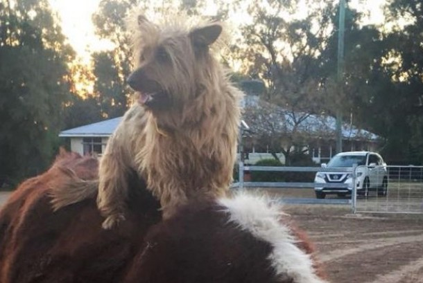 Rusty selama beberapa hari terakhir dirawat di Australia Selatan.