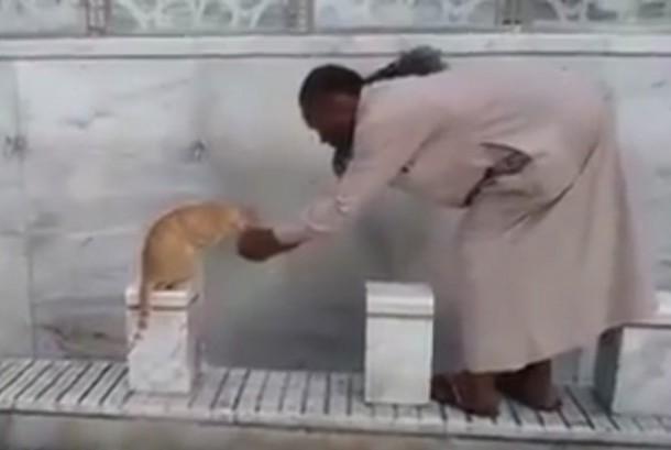 Seorang jamaah umrah memberi minum kucing yang kehausan di Makkah.