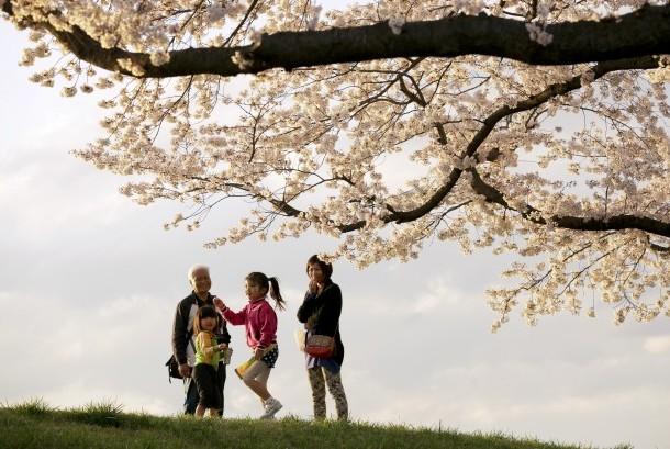 Waktu Terbaik Menikmati Musim Semi di Jepang