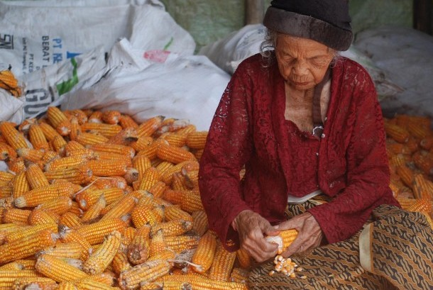 Warga memipil jagung hasil panennya untuk dijual sebagai bahan pakan ternak di Kawengen, Kabupaten Semarang, Jawa Tengah, Selasa (24/1).