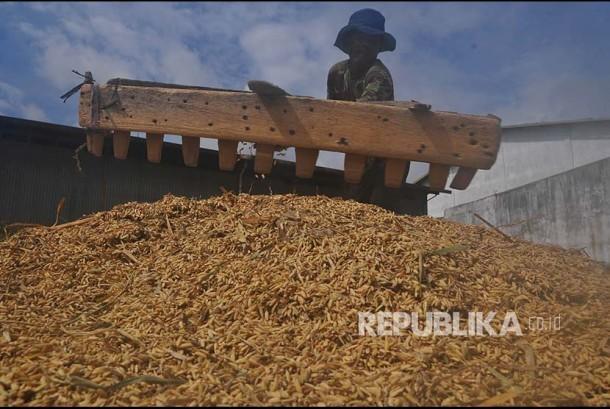 Warga menjemur gabah di tempat penggilingan padi. (ilustrasi)