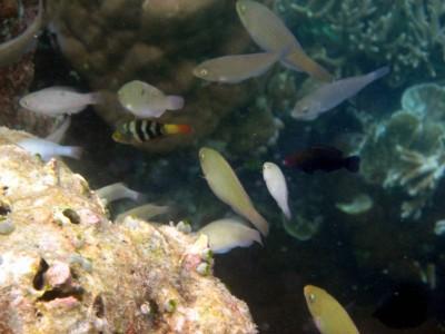 Pembudidayaan ikan hias pun semakin berkembang karena a