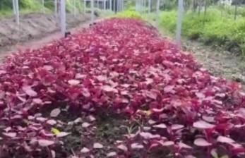 Pertanian Organik Terus Berkembang