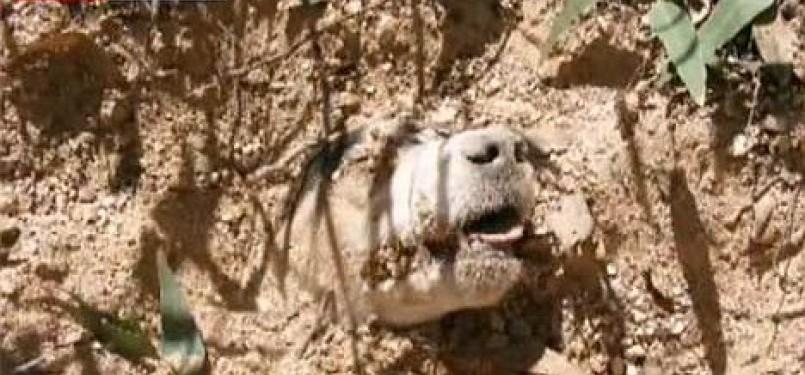 'Bintang' terlihat kesusahan bernafas karena dikubur di pasir dalam kondisi kepalanya ditembak sebanyak 40 kali.