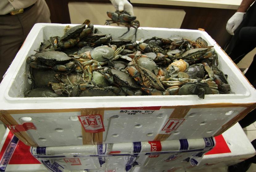 Petugas Bea dan Cukai bersama petugas Karantina Perikanan Aceh memperlihatkan barang bukti kepiting hidup bertelur yang akan dikirim ke Taiwan melalui bandara saat gelar kasus di Banda Aceh, Selasa (7/11).