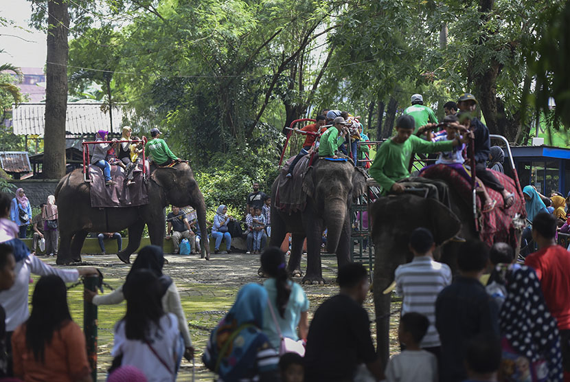 Pengunjung menikmati wahana tunggang gajah di Kebun Binatang Surabaya.