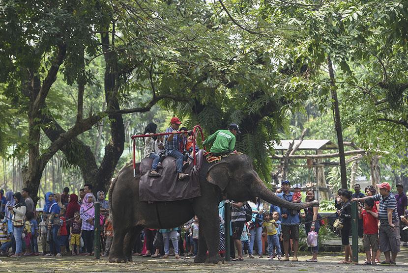 Pengunjung menikmati wahana tunggang gajah di Kebun Binatang Surabaya, Surabaya, Jawa Timur, Selasa (28/3).