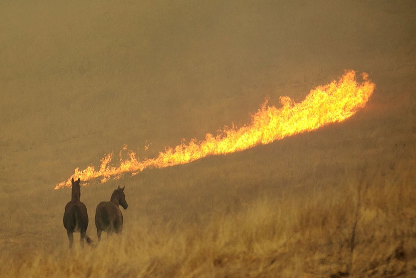 Kebakaran hutan dahsyat melanda Kalifornia, Senin (9/10).