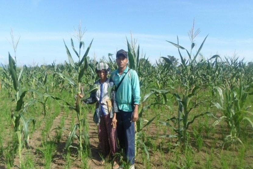 Abah Judin di tengah lahan pertaniannya.