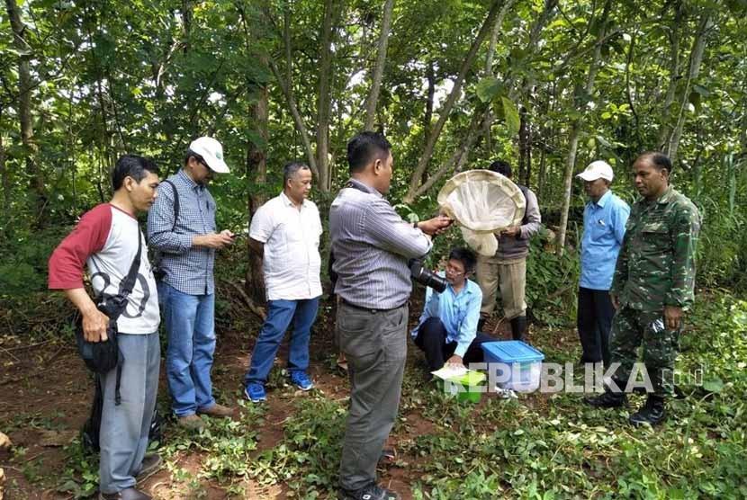 Aktivitas penelitian Fakultas Biologi Universitas Gadjah Mada (UGM) di Kecamatan Wonosari, Kabupaten Gunungkidul, DIY.   Penelitian dilakukan atas serangan ribuan belalang setan (Aularches millaris) di Dusun Karangrejek dan Dusun Baleharjo dua pekan lalu.
