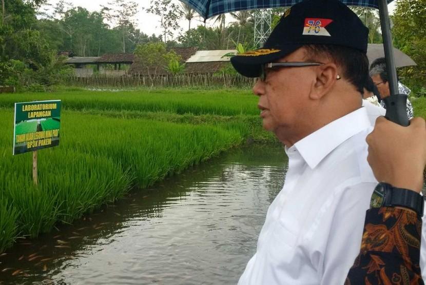 Kelompok Pembudi Daya Ikan Sleman Gelar Panen Mina Padi