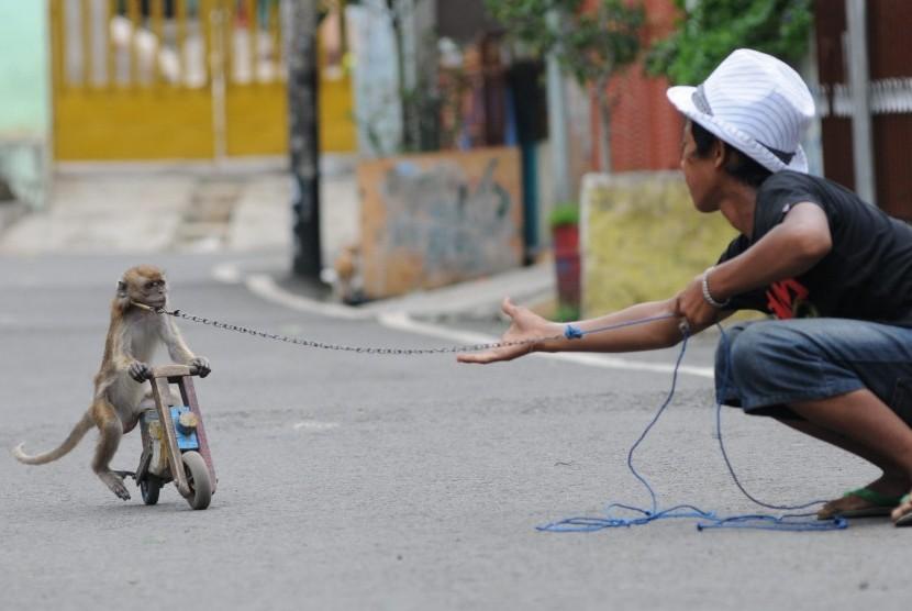 Atraksi pengamen keliling dengan menggunakan kera ekor panjang ditonton anak-anak di permukiman padat penduduk Cempaka Putih, Jakarta Pusat, Kamis (5/4). (Republika/Aditya Pradana Putra)
