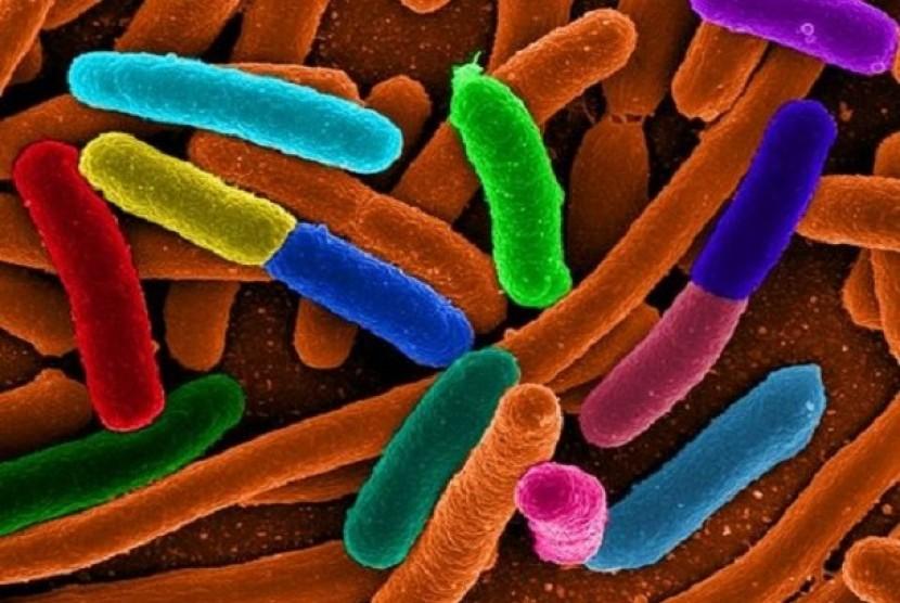Bakteri (ilustrasi)