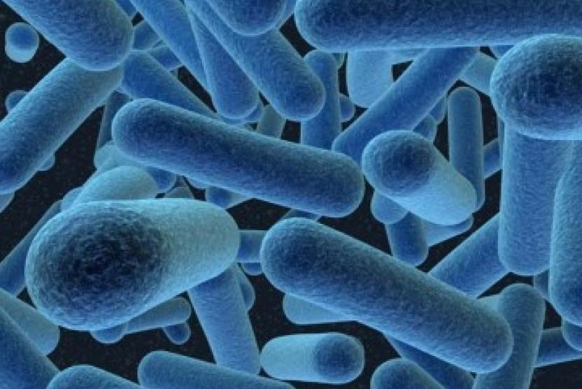 Bakteri. Ilustrasi