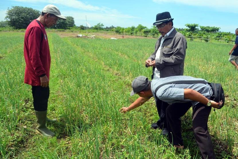 Balitsa Berikan Pendampingan Petani Bawang Merah