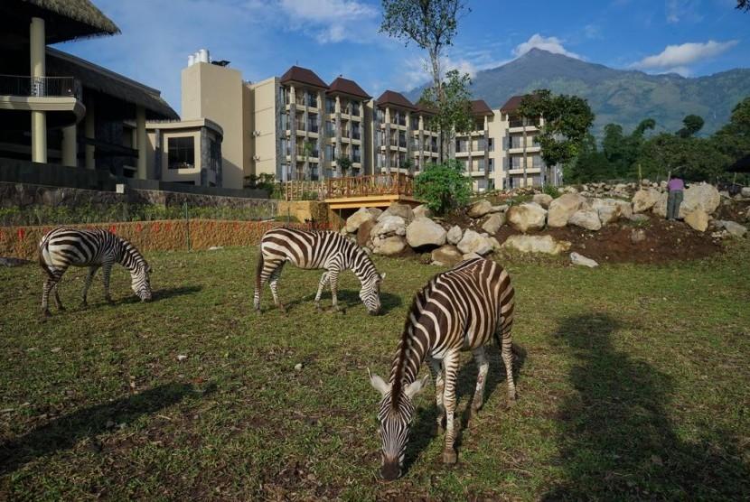 Hasil gambar untuk resort yang dikelilingi satwa liar