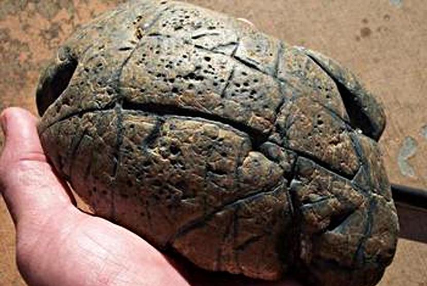 Batu mirip otak. Ilustrasi
