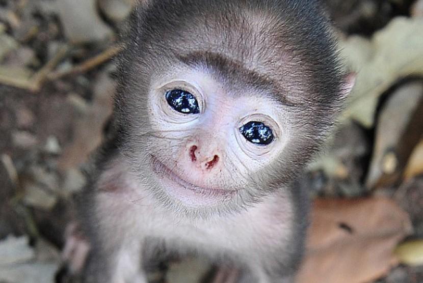 Bayi monyet imut