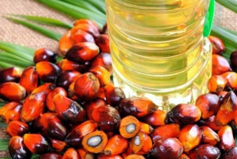 Buah Kelapa Sawit dan minyak yang dihasilkan (ilustrasi)