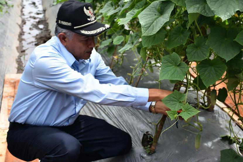 Bupati Sleman, Sri Purnomo, melakukan panen perdana timun baby milik Badan Usaha Milik Desa (Bumdes) Bintang 18 di Dusun Clumprit, Desa Sardonoharjo, Kecamatan Ngaglik, Selasa (13/3).