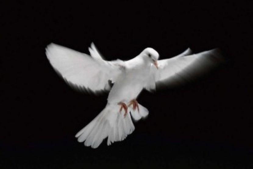 Polisi Bongkar Kandang Burung Merpati Diduga untuk Judi