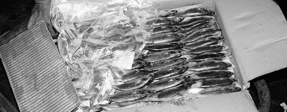 Contoh produk ikan impor yang masuk ke Indonesia.