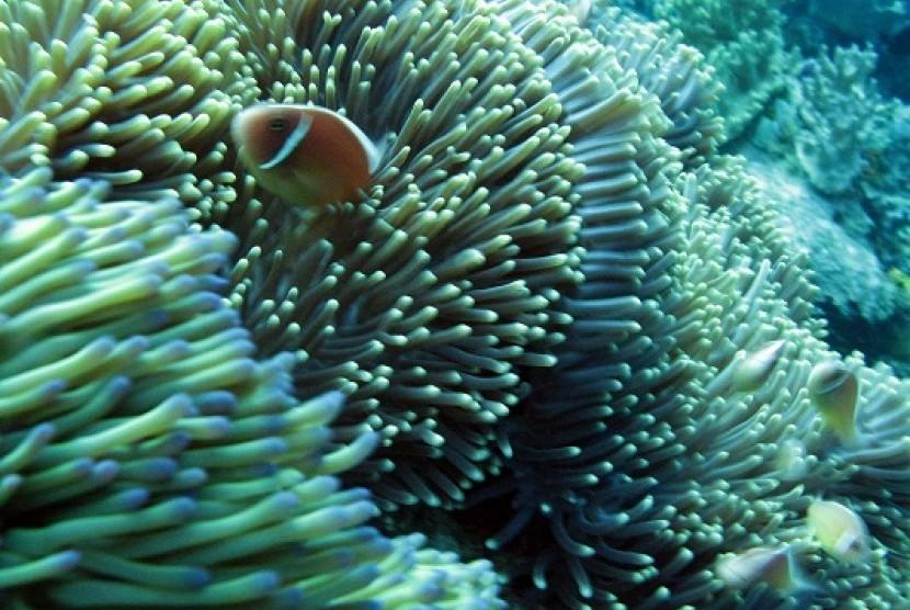 Coral reefs in Raja Ampat, Papua (illustration)