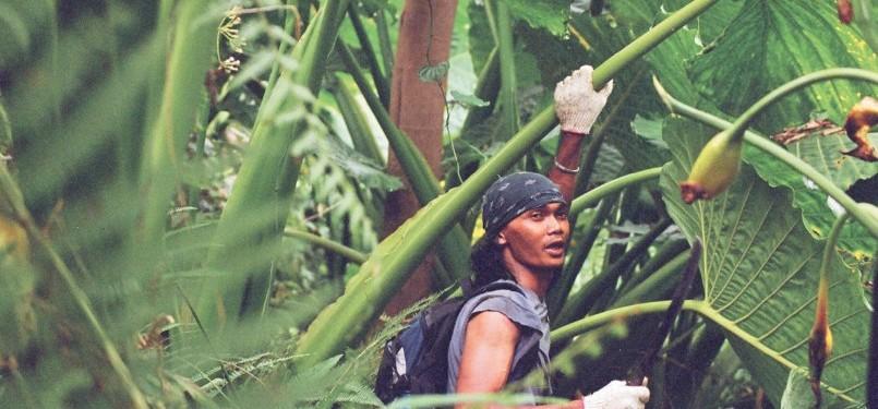 Di tengah hutan talas. Memasuki medan seperti ini seakan berada di kawasan para raksasa. Daun-daun talas mempunyai lebar daun yang jarang ditemui di pulau Jawa.