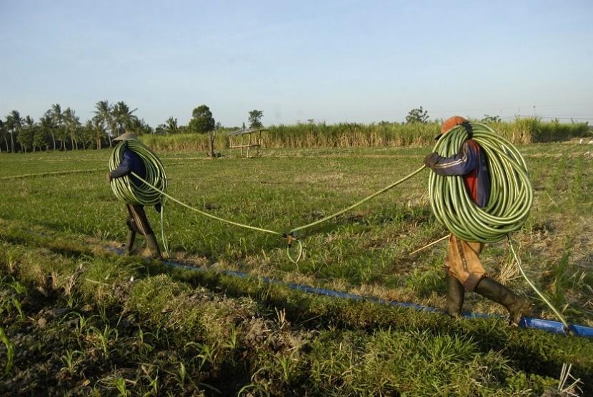 Farmers spraying chemical fertilizer. (Illustration)