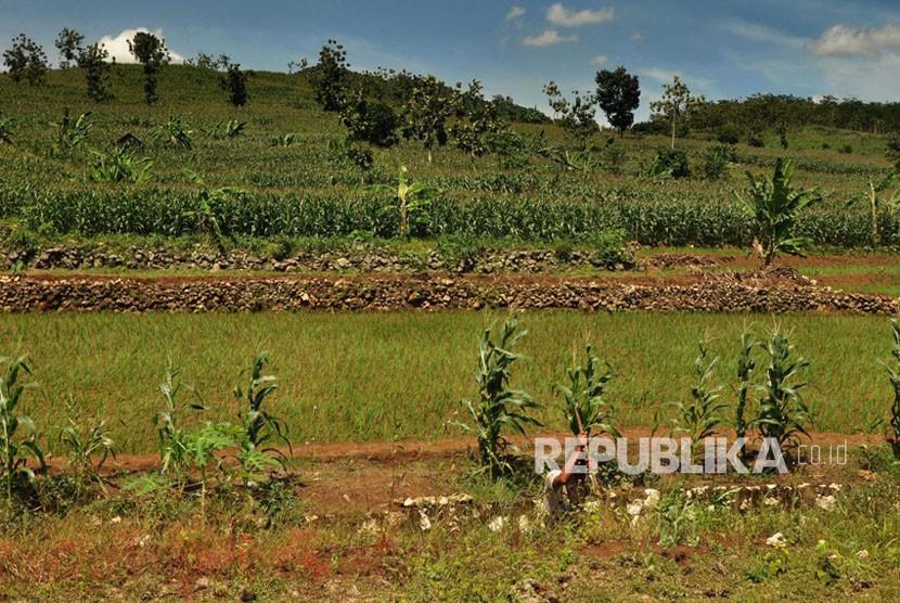 Embung Tegaldowo di Desa Tegaldowo, Kecamatan Gunem, Kabupaten Rembang, Jawa Tengah dan aktivitas pertanian warga Ring I pabrik PT Semen Indonesia di Rembang.