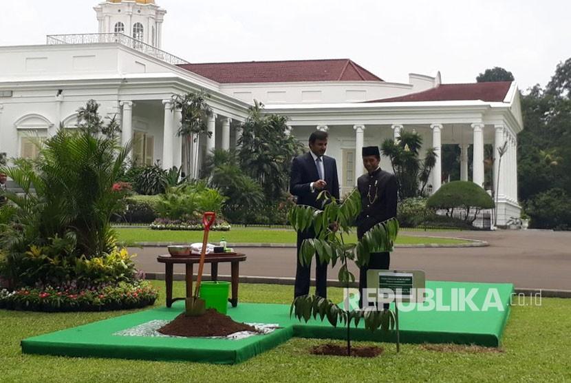 Emir Qatar Syekh Tamim bin Hamad Al Thani bersama Presiden Joko Widodo menanam pohon Eboni di halaman belakang istana negara,Bogor (18/10).