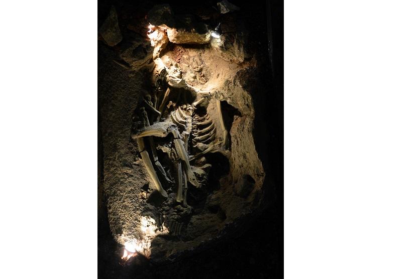 Fosil Manusia Purba di Flores, Badan Geologi Belum ...