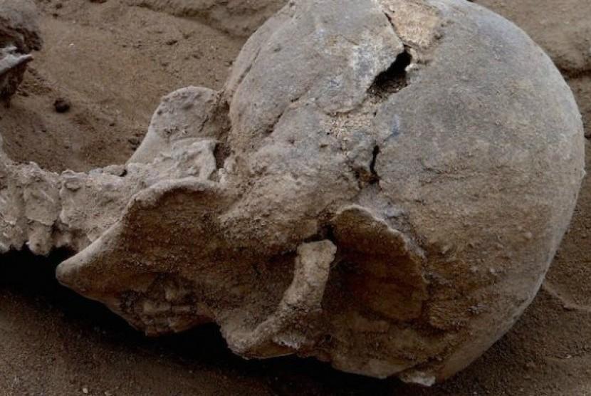 fosil yang ditemukan di Kenya