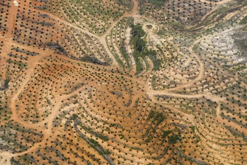 Foto udara perkebunan kelapa sawit di Belitung, Bangka Belitung, Jumat (16/12).