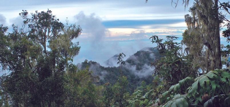 Fuyul (Gunung) Sojol