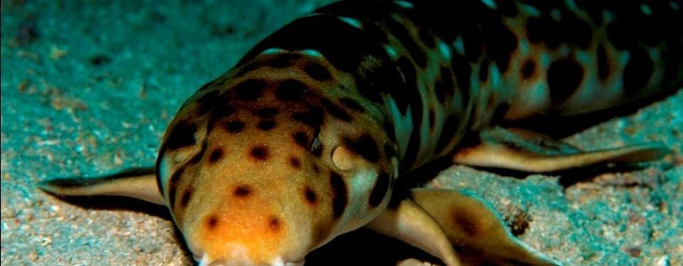 Gambar 1: ET Salamander nama latin Bolitoglossa sp. nov