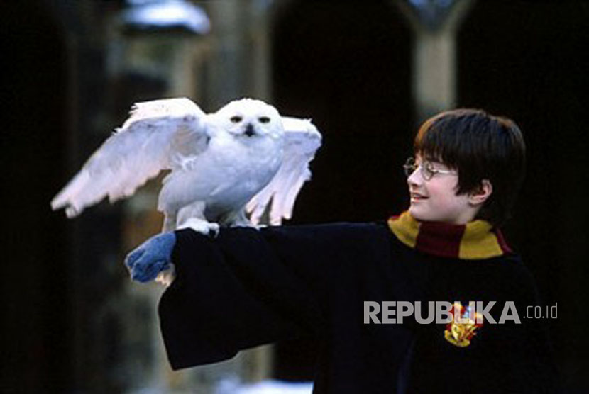 Harry Potter dan Burung Hantu putih