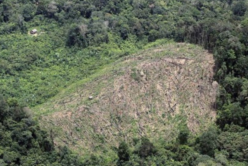 Hutan. Ilustrasi