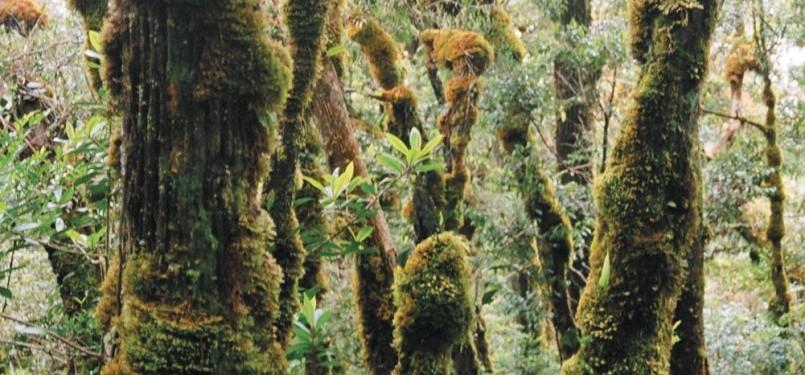 Hutan lumut mendominasi vegetasi dari ketinggian 1500 m dpl sampai puncak.