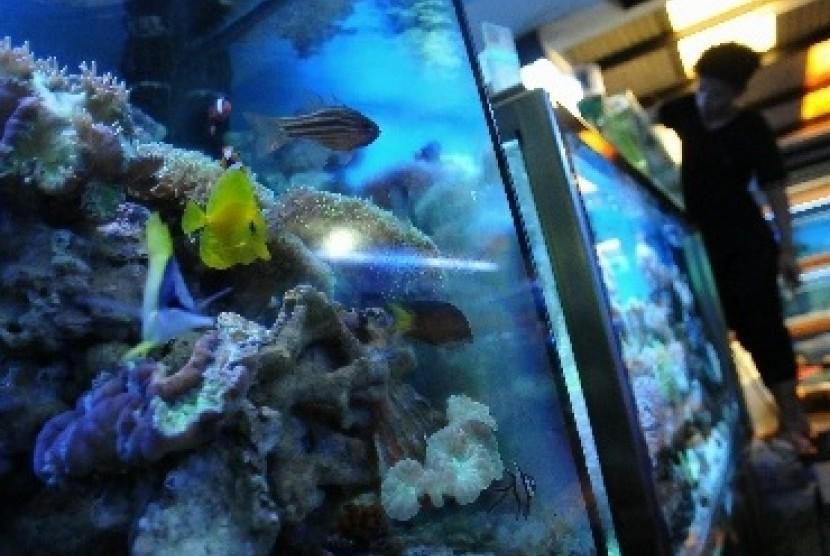Produksi Ikan dan Tanaman Hias dari Bojongsari Kian Mendunia