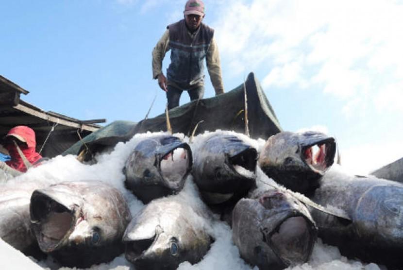 Ikan tuna beku (ilustrasi)